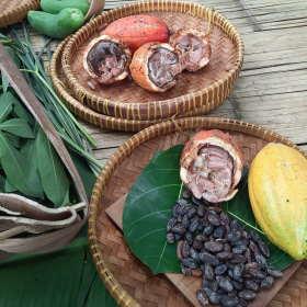 cacao-beans-from-garden-dapur-tara-flores-restaurant-komodo