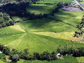 spider-rice-fields-places-to-visit--sten-lodge-eco-homestay